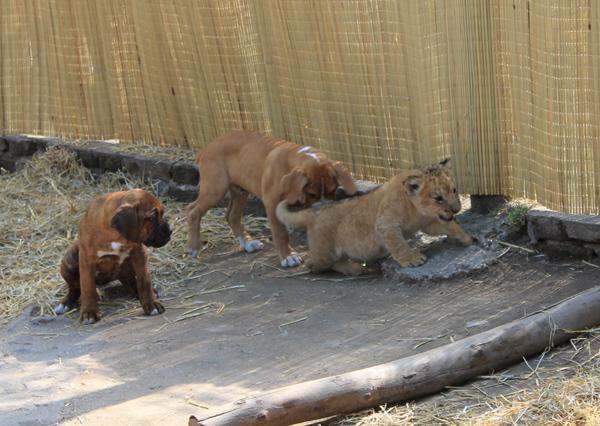 zoo lujan preço 2016