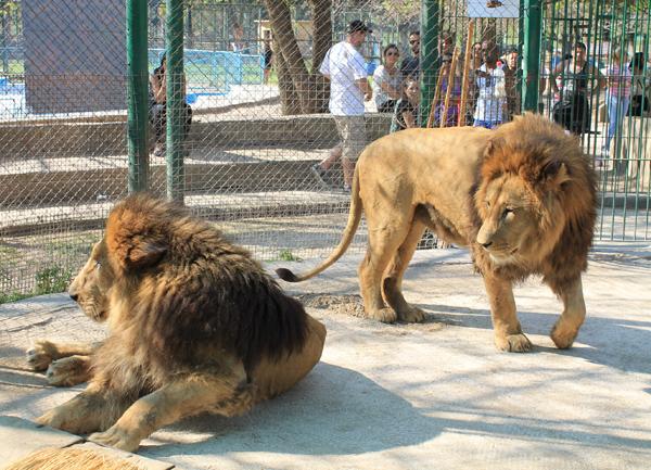 Leão Zoo Luján
