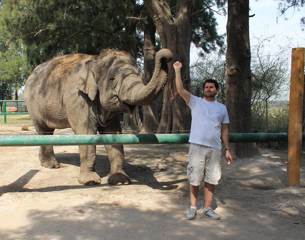 Zoológico Lujan Elefante